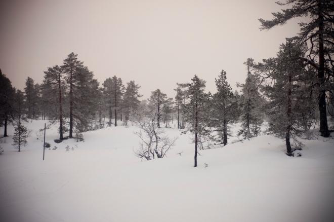 vikerfjell05
