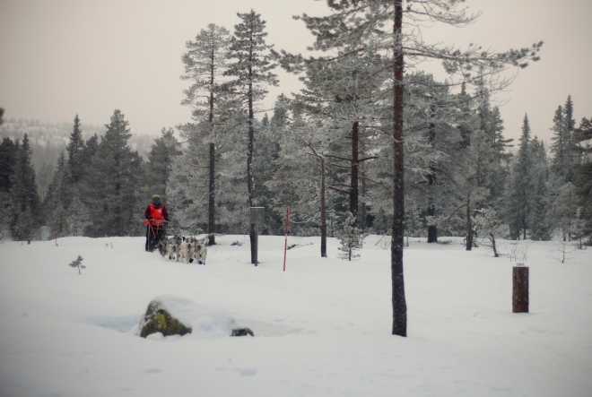 vikerfjell06